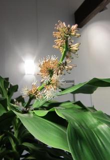 幸福の花.JPG