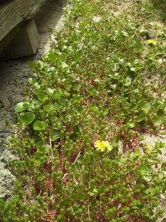 浜辺の植物.jpg