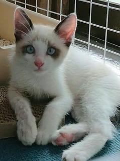 雄猫さん 107993151_3064710243618426_8945771749276985088_n.jpg